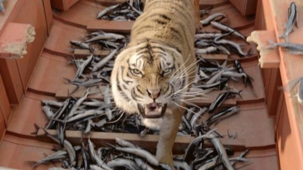 O tigre de bengala Richard Parker é um dos feitos por computação gráfica (photo by OutNow.CH)