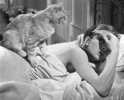 Audrey Hepburn e seu gato em Bonequinha de Luxo (photo by theladyandthecat.tumblr.com)