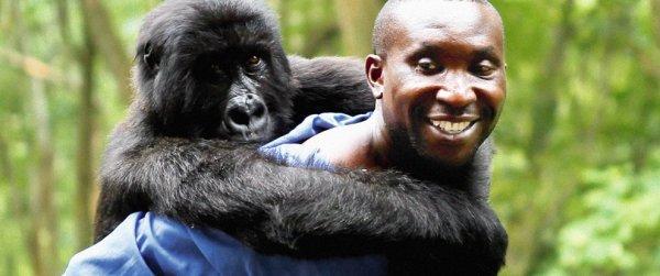 Cena do documentário Virunga, sobre a proteção aos gorilas quase extintos do Congo (photo by outnow.ch)