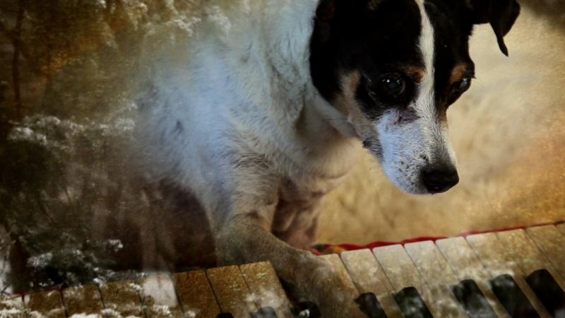Cena do documentário Coração de Cachorro, de Laurie Anderson (photo by cine.gr)