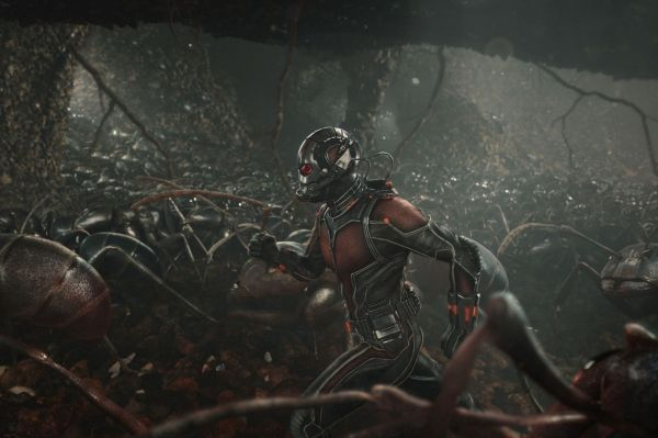 ant-man-289003l-1600x1200-n-e4c88576