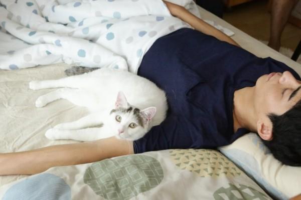 Asako Cat Jintan
